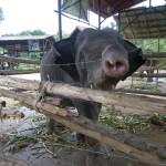 Ein junger Elefant mit sechs Jahren will mit mir spielen