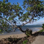 Strand von Apia